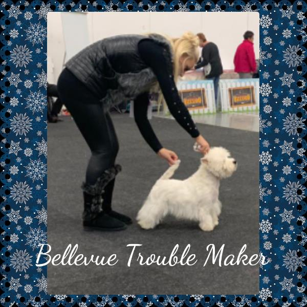 Bellevue Trouble Maker
